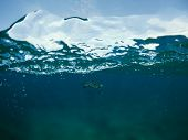 Sea Turtle In Blue Seawater. Double Split Photo With Marine Animal. Double Seascape With Sea And Sky poster