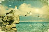 Seagulls In The Sky.vintage Nature Seascape Background