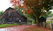 Picturesque old barn and shed with fallen bright red leaves