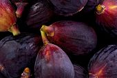 Black Mission Figs (ficus Carica)