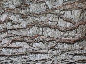 Rough Wood Skin