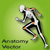 Vector concept or conceptual white and black man anatomy illustration on green background for medica