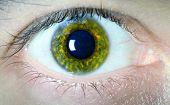 Macro de olho verde