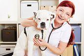 Glücklich Tierarzt auscultating Boxer Hund mit Stethoskop in einer Klinik