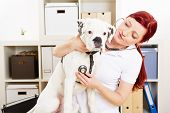 Tierarzt auscultating Boxer Hund mit Stethoskop in Tierklinik