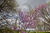 St. Louis Gateway Arch in the spring