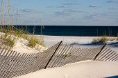 image of sea oats  - Sand fences along the coastline use the power of the wind to built up the dunes and promote the growth of sea oats along the Gulf Coast around Pensacola Florida - JPG