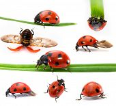 pic of mating animal  - Collection of Seven - JPG