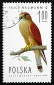 Postage Stamp Poland 1975 Lesser Kestrel Falcon