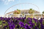 picture of olympic-games  - Flowering flowers outside Khalifa sports stadium in Doha Qatar Middle East where the 2006 Asian games were hosted and location for the proposed 2016 Olympic Games  - JPG