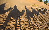 Caravan Shadows