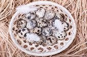 Quail Eggs In A Wattled Basket With Straw