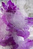 Background Of    Gladiolus Flower Frozen In Ice