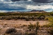 stock photo of arid  - West Texas desert landscape with arid plants - JPG