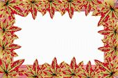Yellowish Orange Maple Leaves In Portrait Frame.