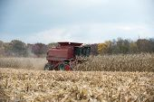 Combining Corn Field