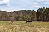 Sunny Landscape Of Ural Meadow And Horses