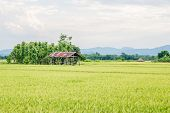 stock photo of mud-hut  - Rice field and a hut in the countryside - JPG