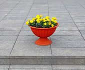 Brown Pot With Yellow Flowers Marigolds