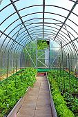 Vegetable Greenhouses Made Of Transparent Polycarbonate