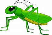 pic of locust  - cheerful small green grasshopper vector and illustration - JPG