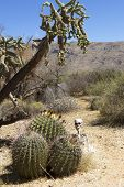 Skeleton in Cactus Forest in Desert