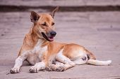 Stray Dog living On The Streets Or Communities.