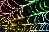 Sparkling Spider Web