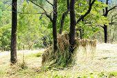 Flood Flatten Grass
