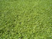 Sunshine On Grass