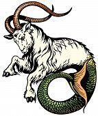 pic of capricorn  - capricorn astrological zodiac sign isolated on white - JPG