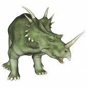 Aggressive Dinosaur Styracosaurus