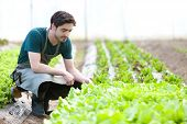 Young Attractive Farmer Verify Progress Of Culture