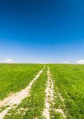 Summer Lawn Acres Wild