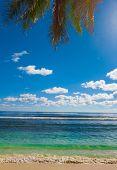 Palms Trees Sea