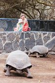 Family watching giant turtle at Galapagos island of Isabela
