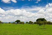 Beautiful landscape of Tarangire national park, Tanzania
