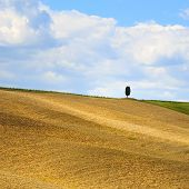 Tuscany, Cypress Tree On Hill And Fields. Siena Orcia, Italy.