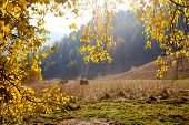 Haystacks Autumn In Altai