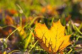 Fall Leaf at a Meadow