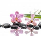 spa concept with two orchid on wet black stones with palm leaf