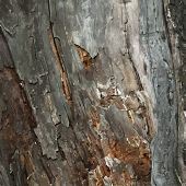 Old Timber Wood Abstract background