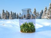 Grass in a glass jar in the snow.