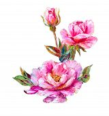Roses isolated on white, oil painting on canvas