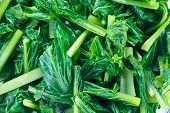 picture of kale  - Vegetables Green Kale Are Pieces In A Bowl  - JPG