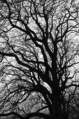 tangled old tree's branches