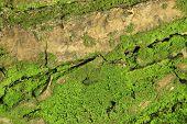 moss textured