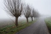 foto of row trees  - Country road in a rural landscape with a row of bare willow trees - JPG