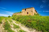 stock photo of farmhouse  - Old farmhouse in tuscany at spring  - JPG