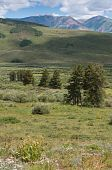 Meadows near Crested Butte